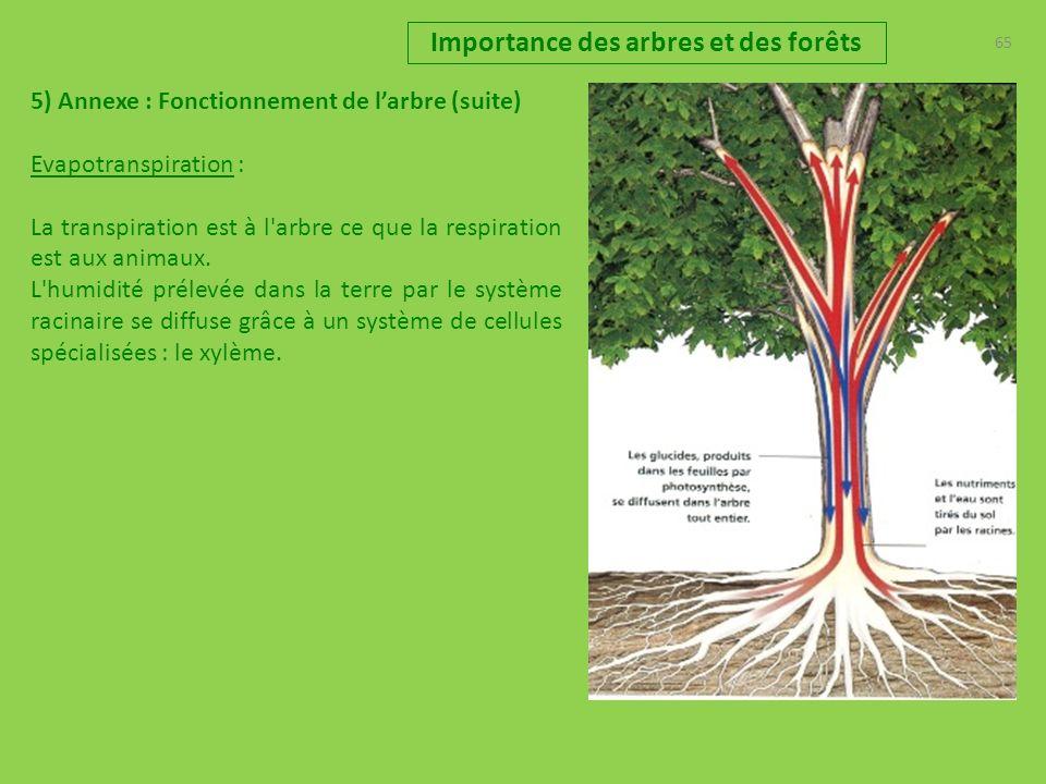 65 Importance des arbres et des forêts 5) Annexe : Fonctionnement de larbre (suite) Evapotranspiration : La transpiration est à l arbre ce que la respiration est aux animaux.