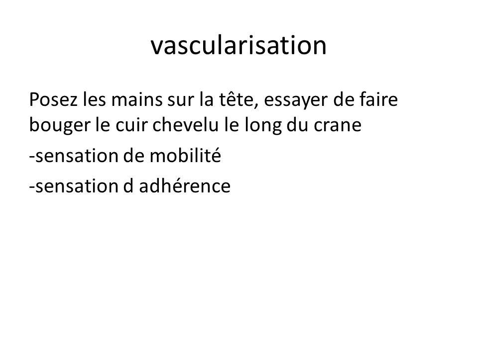 vascularisation Posez les mains sur la tête, essayer de faire bouger le cuir chevelu le long du crane -sensation de mobilité -sensation d adhérence