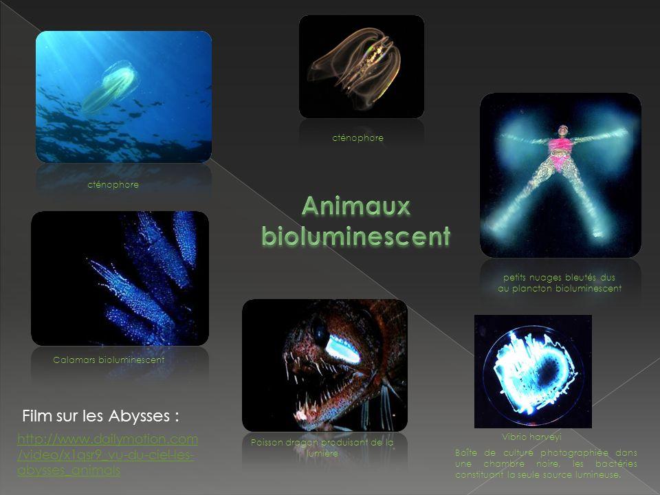 cténophore http://www.dailymotion.com /video/x1qsr9_vu-du-ciel-les- abysses_animals Film sur les Abysses : petits nuages bleutés dus au plancton bioluminescent Calamars bioluminescent Poisson dragon produisant de la lumière Vibrio harveyi Boîte de culture photographiée dans une chambre noire, les bactéries constituant la seule source lumineuse.