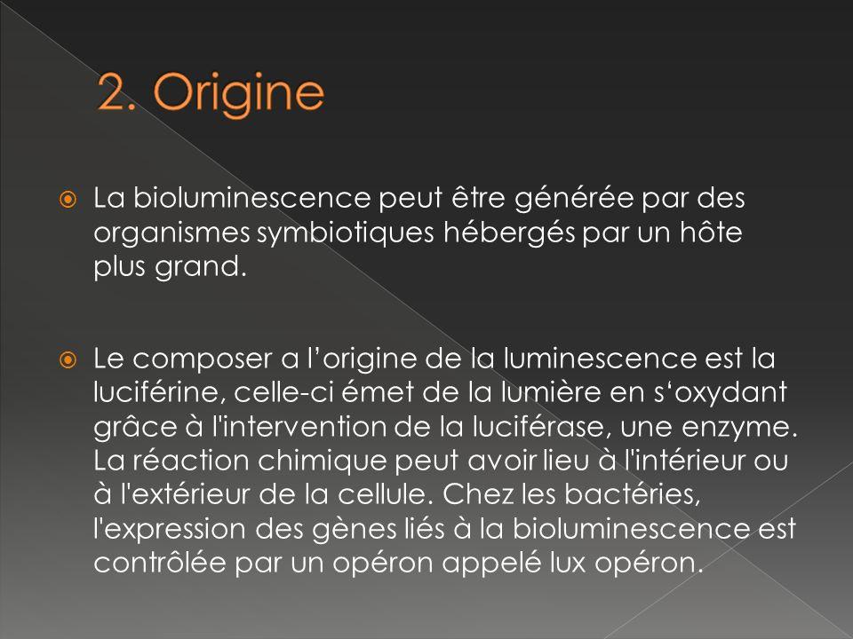 luciférine Luciférase (enzyme) Complexe Luciférine/Luciférase O2O2 Complexe oxydé et donc excité alors émissions de photons Dioxygène