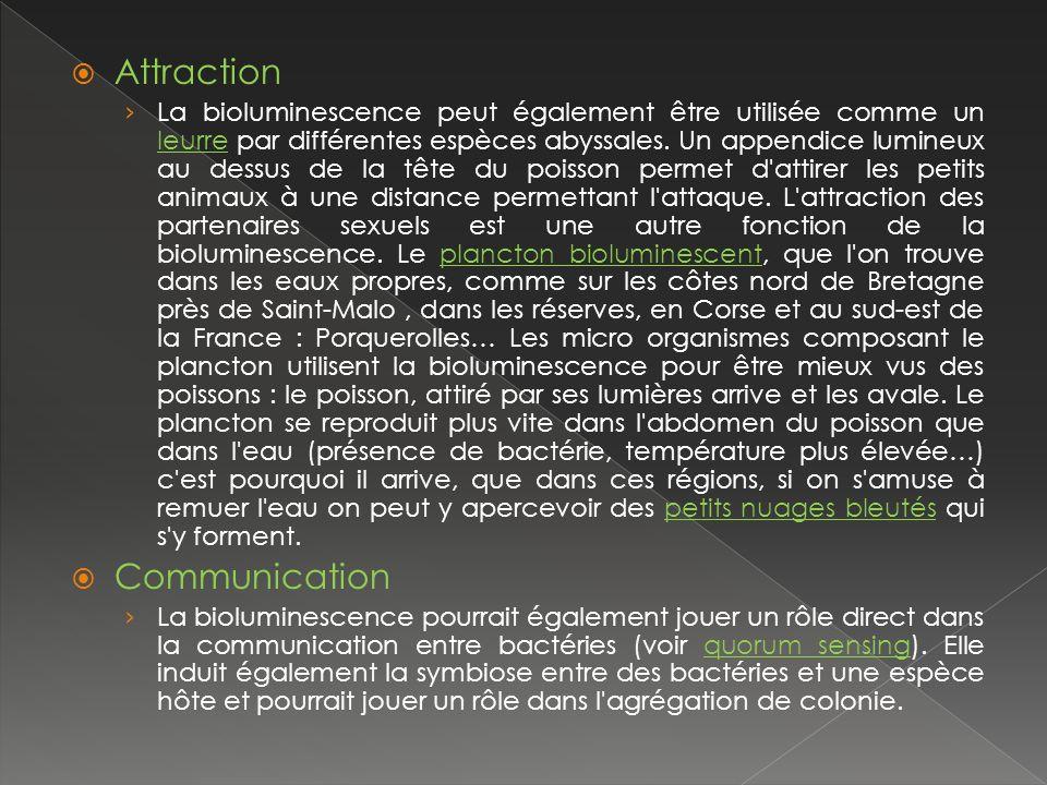 Attraction La bioluminescence peut également être utilisée comme un leurre par différentes espèces abyssales.