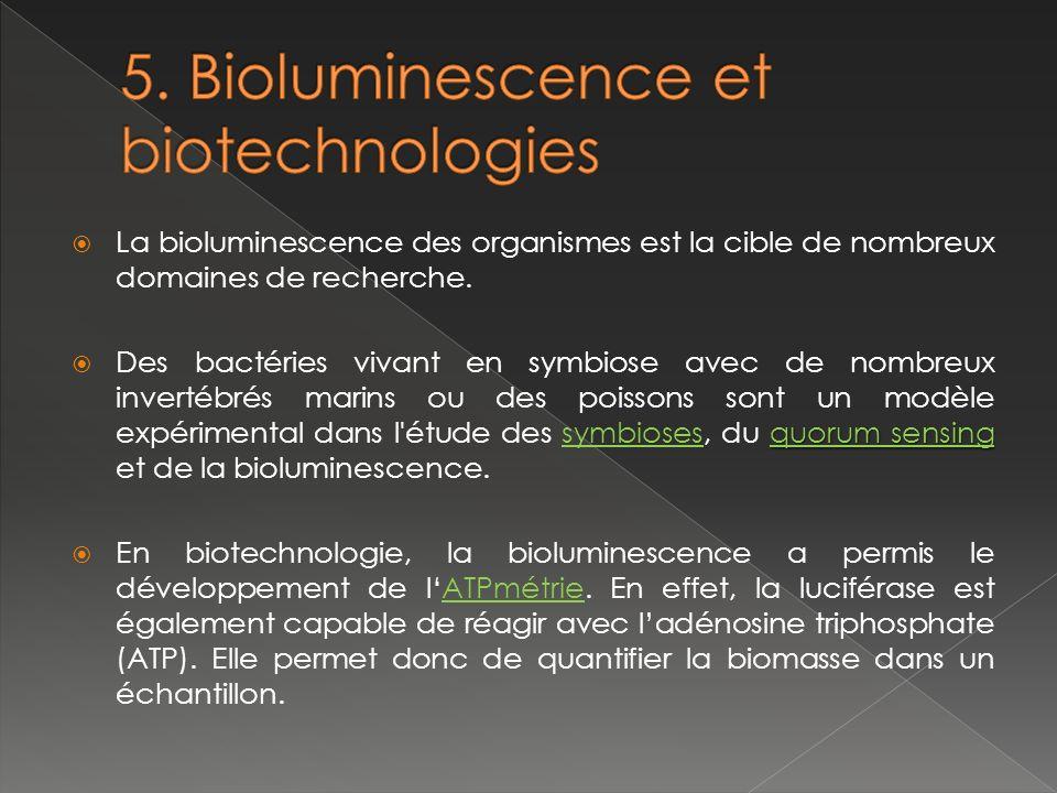 La bioluminescence des organismes est la cible de nombreux domaines de recherche.