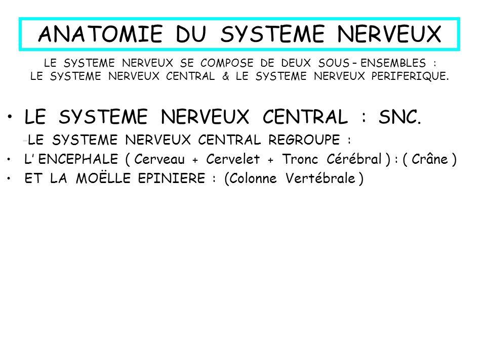 INTRODUCTION : Le contrôle du fonctionnement est assuré par laction combinée du système nerveux et du système hormonal.