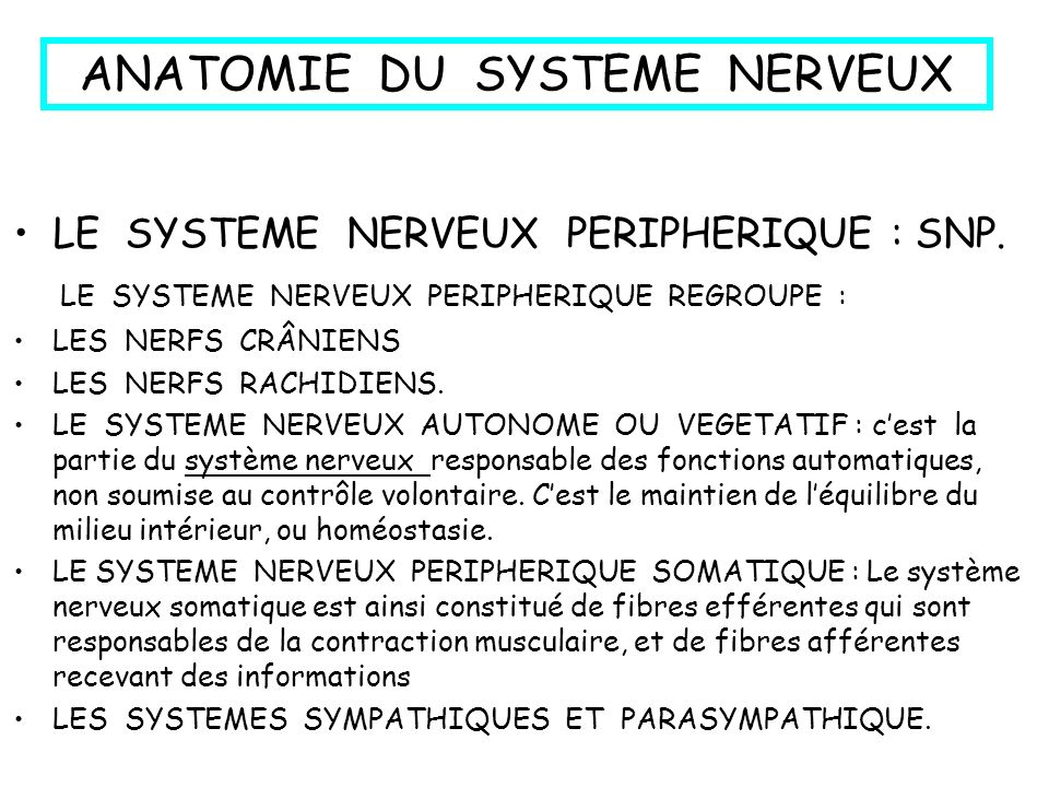 ANATOMIE DU SYSTEME NERVEUX LE SYSTEME NERVEUX CENTRAL : SNC. -LE SYSTEME NERVEUX CENTRAL REGROUPE : L ENCEPHALE ( Cerveau + Cervelet + Tronc Cérébral