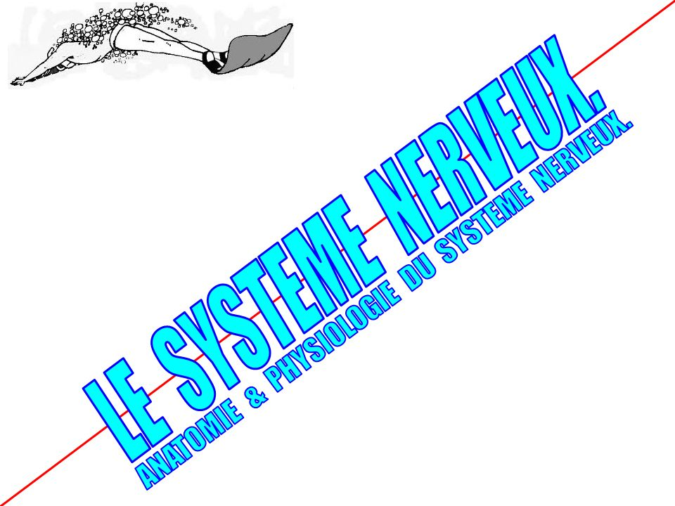 LES CONNAISSANCES FONDAMENTALES Y.RUELLO : CTN en sports sous marins - 29/09/2012 LE.F.1