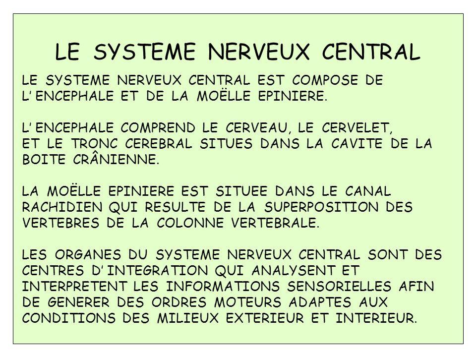 Le système nerveux a la responsabilité de coordonner les fonctions de toutes les parties de notre corps.