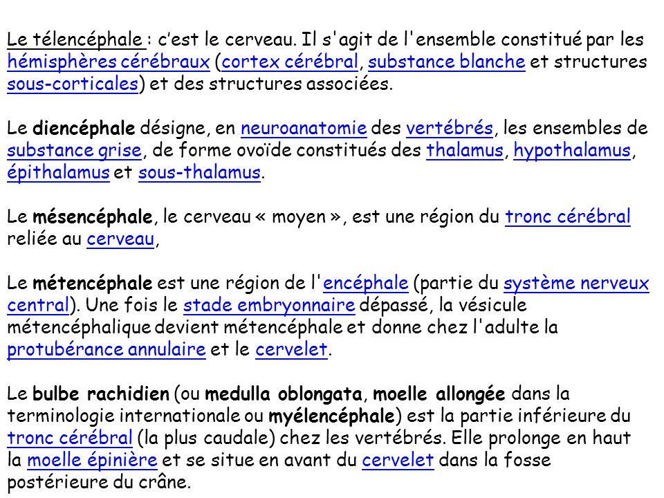 LE SYSTEME NERVEUX CENTRAL MESENCEPHALE DIENCEPHALE MYELENCEPHALEMETENCEPHALE TELENCEPHALE