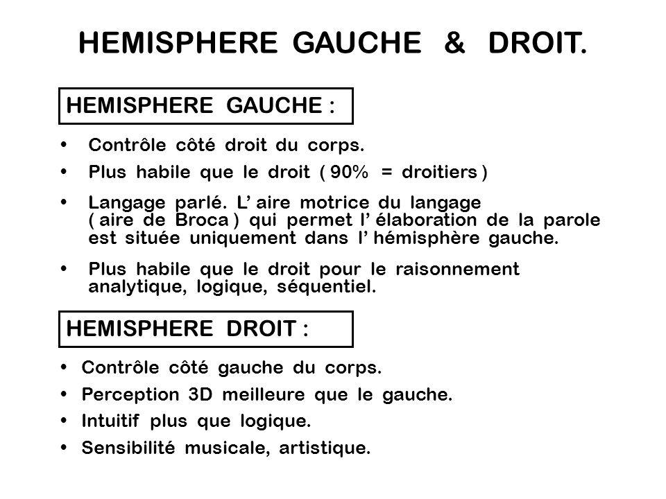 Fissure Interhémisphèrique Hémisphère Gauche Hémisphère Droit