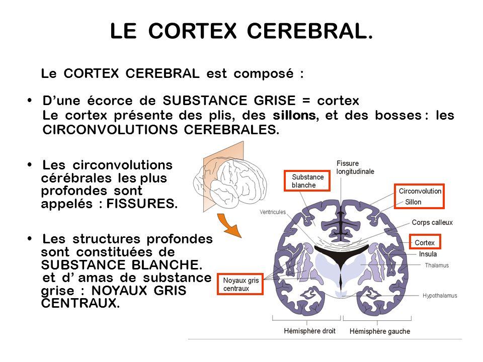 Hémisphère gauche : relié au côté droit du corps Hémisphère droit : relié au côté gauche du corps Toutes les fibres nerveuses sensorielles et motrices se croisent dans le S.N.C.