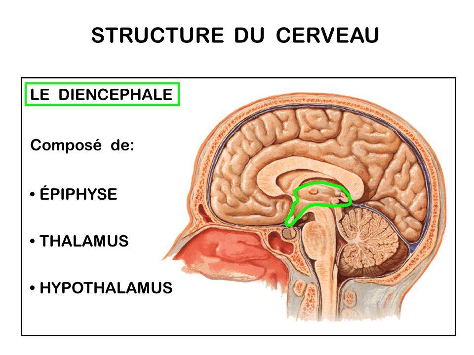 De vastes zones du cortex ne sont pas reliées ni à la perception des sensations, ni à l élaboration des mouvements. Ces zones sont dites non - spécifi