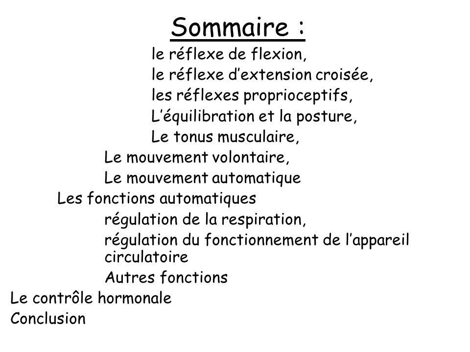 Sommaire : Introduction Le système nerveux : - La cellule nerveuse - Les centres nerveux et les nerfs, - LInflux nerveux et sa propagation Les récepte