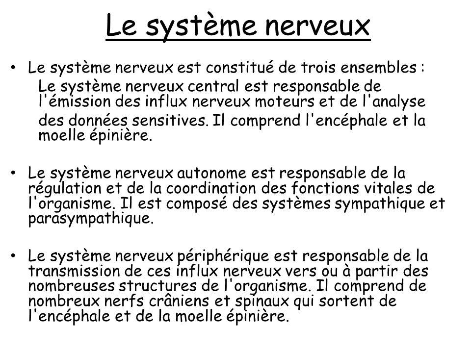 LE SYSTEME NERVEUX PERIPHERIQUE LE SYSTEME NERVEUX PERIPHERIQUE SE DIVISE EN : - SYSTEME NERVEUX PERIPHERIQUE AUTONOME.