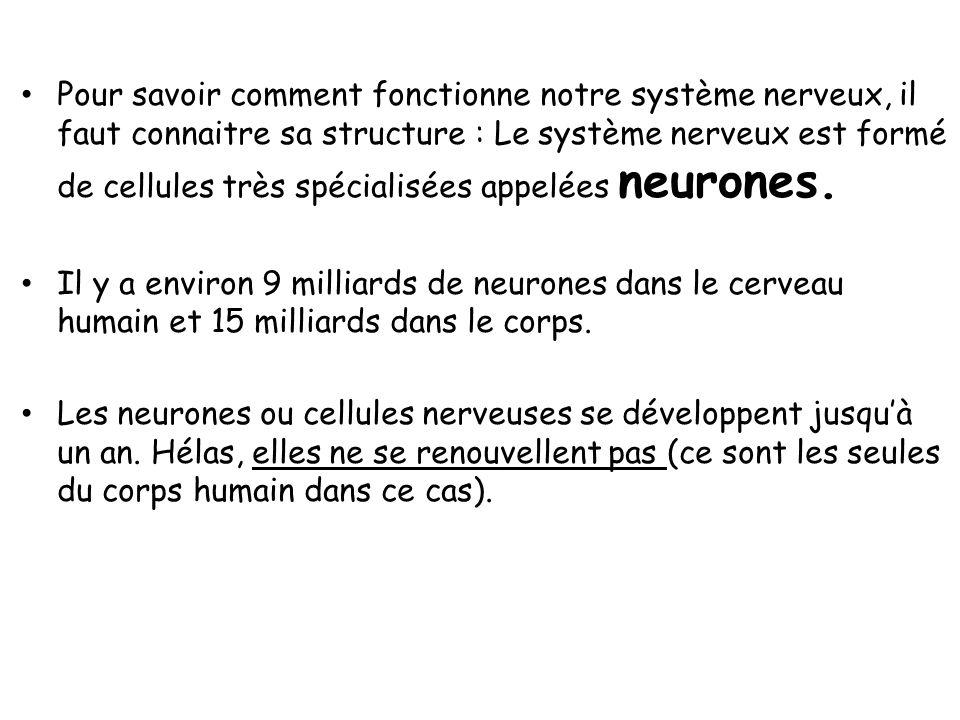 Une substance blanche entoure la substance grise. Elle est constituée daxones neuronaux. Cest une voie de communication des informations sensitives re