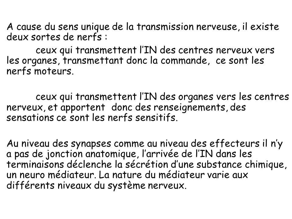 LInflux nerveux et sa propagation : Le rôle principal du neurone est de transmettre des excitations qui peuvent avoir des sources multiples (pincement