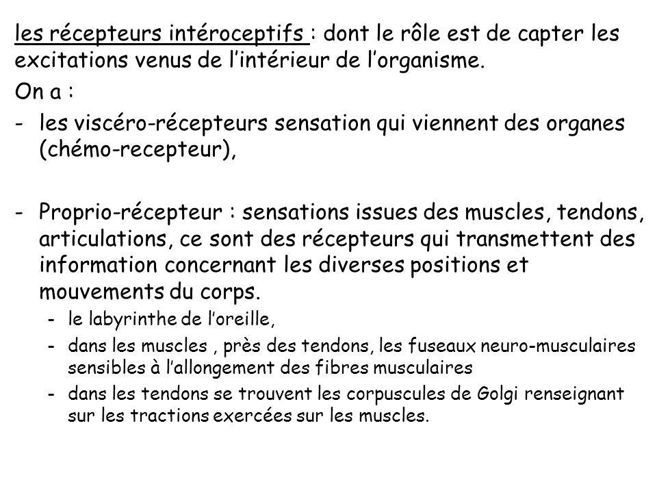 Les récepteurs et le système nerveux sensitif : Les récepteurs sont chargés de codifier les sensations en les transformant en influx nerveux. On repèr