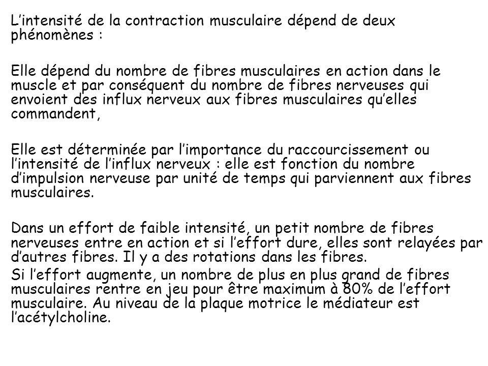 Le système nerveux moteur : la commande des muscles squelettique : Les fibres nerveuses sensitives partent des muscles renseignent les centres supérie