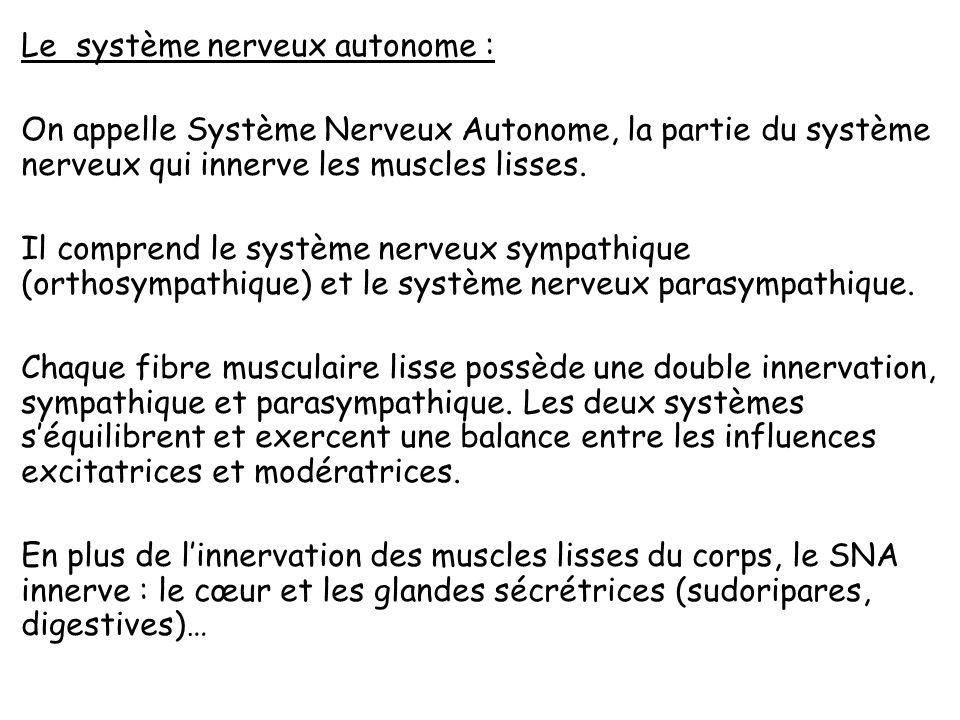 Lintensité de la contraction musculaire dépend de deux phénomènes : Elle dépend du nombre de fibres musculaires en action dans le muscle et par conséquent du nombre de fibres nerveuses qui envoient des influx nerveux aux fibres musculaires quelles commandent, Elle est déterminée par limportance du raccourcissement ou lintensité de linflux nerveux : elle est fonction du nombre dimpulsion nerveuse par unité de temps qui parviennent aux fibres musculaires.