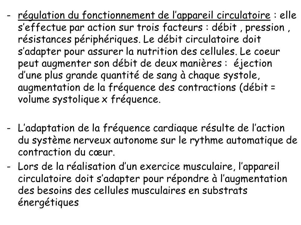 Les fonctions automatiques : -régulation de la respiration :les centres respiratoires doués dune activité rythmique commandent, par lintermédiaire des
