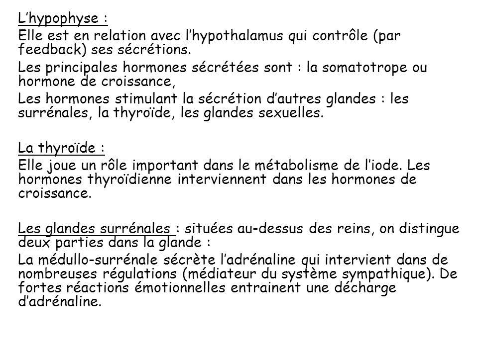 Il existe dautres lieux de production des hormones : Rein, coeur, système digestif (estomac, intestin grêle),… Les hormones synthétisées dans lorganis