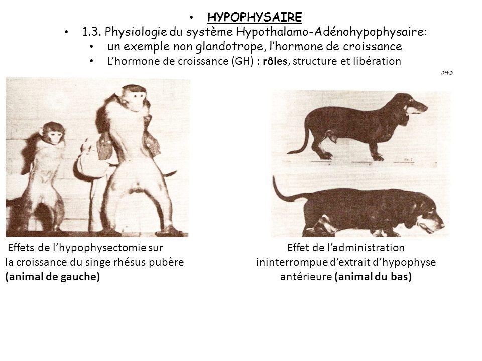 Les glandes sexuelles : La testostérone, hormone mâle, agit sur le développement du squelette, la formation du muscle… La folliculine et la progressio