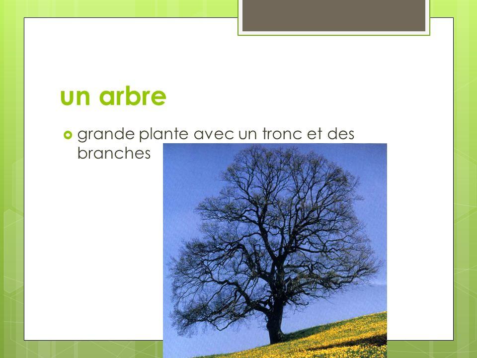 un arbre grande plante avec un tronc et des branches
