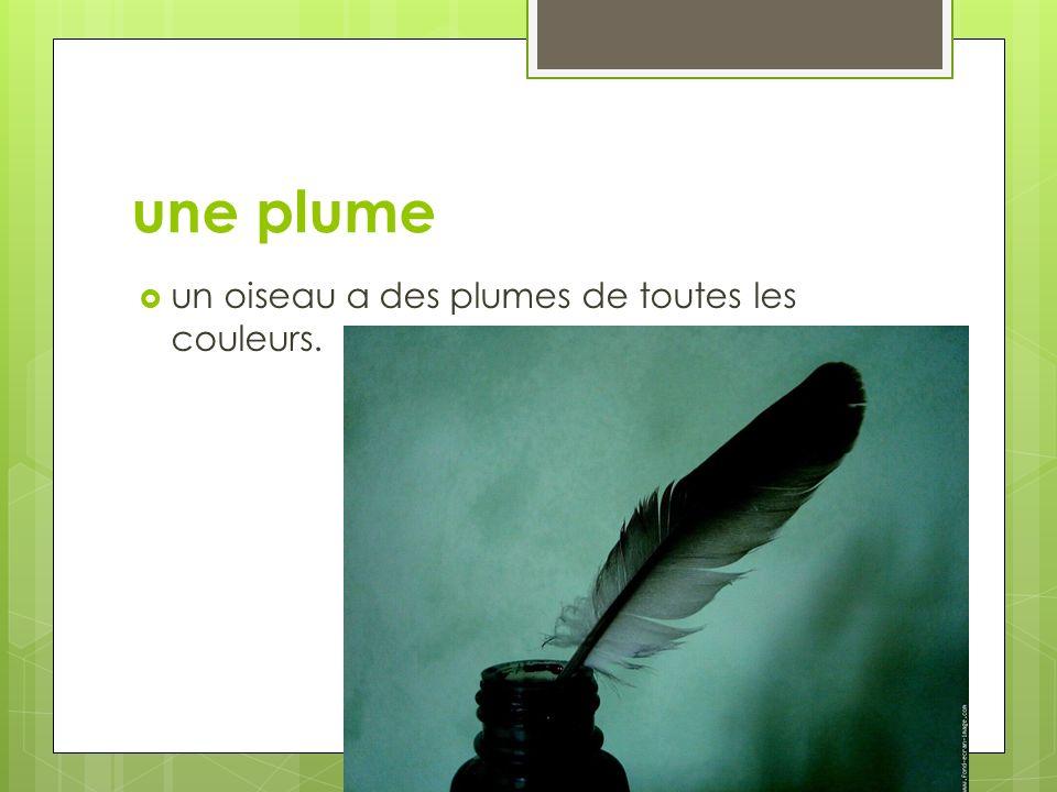 une plume un oiseau a des plumes de toutes les couleurs.