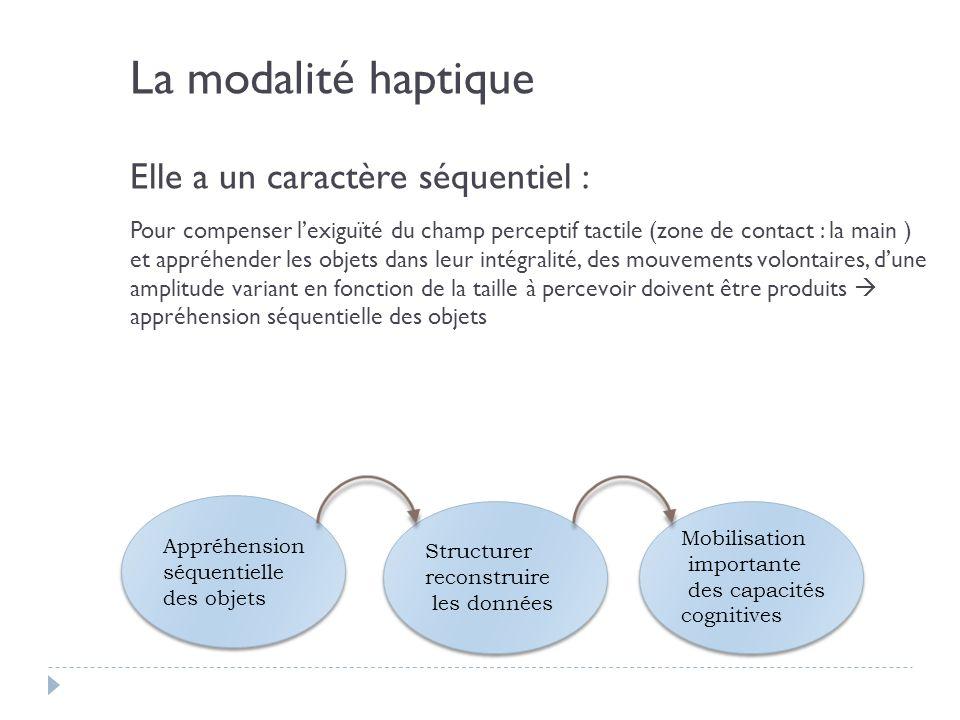 La modalité haptique Elle a un caractère séquentiel : Pour compenser lexiguïté du champ perceptif tactile (zone de contact : la main ) et appréhender