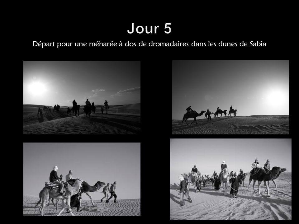 Départ pour une méharée à dos de dromadaires dans les dunes de Sabia