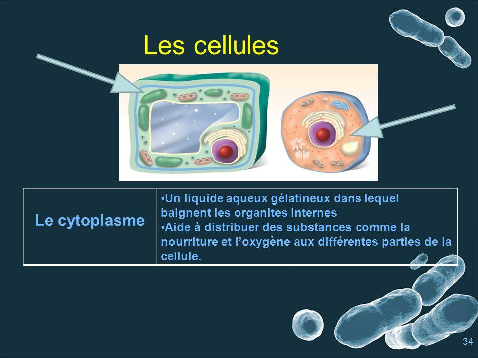 Les cellules Le cytoplasme Un liquide aqueux gélatineux dans lequel baignent les organites internes Aide à distribuer des substances comme la nourriture et loxygène aux différentes parties de la cellule.