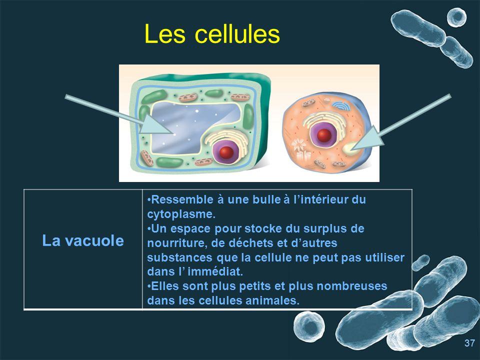 37 Les cellules La vacuole Ressemble à une bulle à lintérieur du cytoplasme.