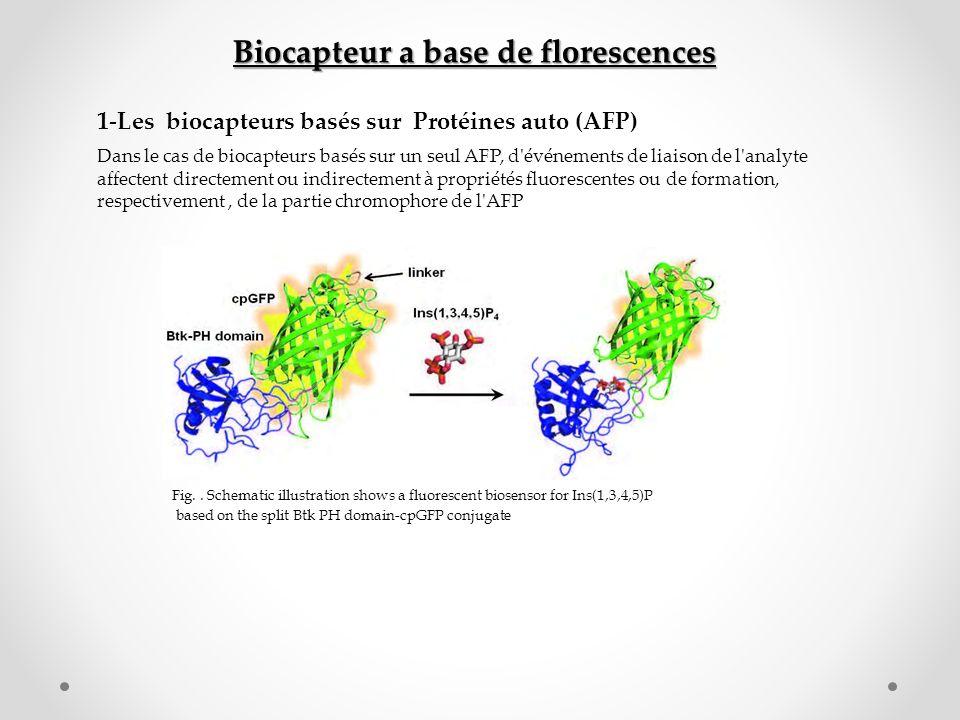 Biocapteur a base de florescences 1-Les biocapteurs basés sur Protéines auto (AFP) Dans le cas de biocapteurs basés sur un seul AFP, d'événements de l