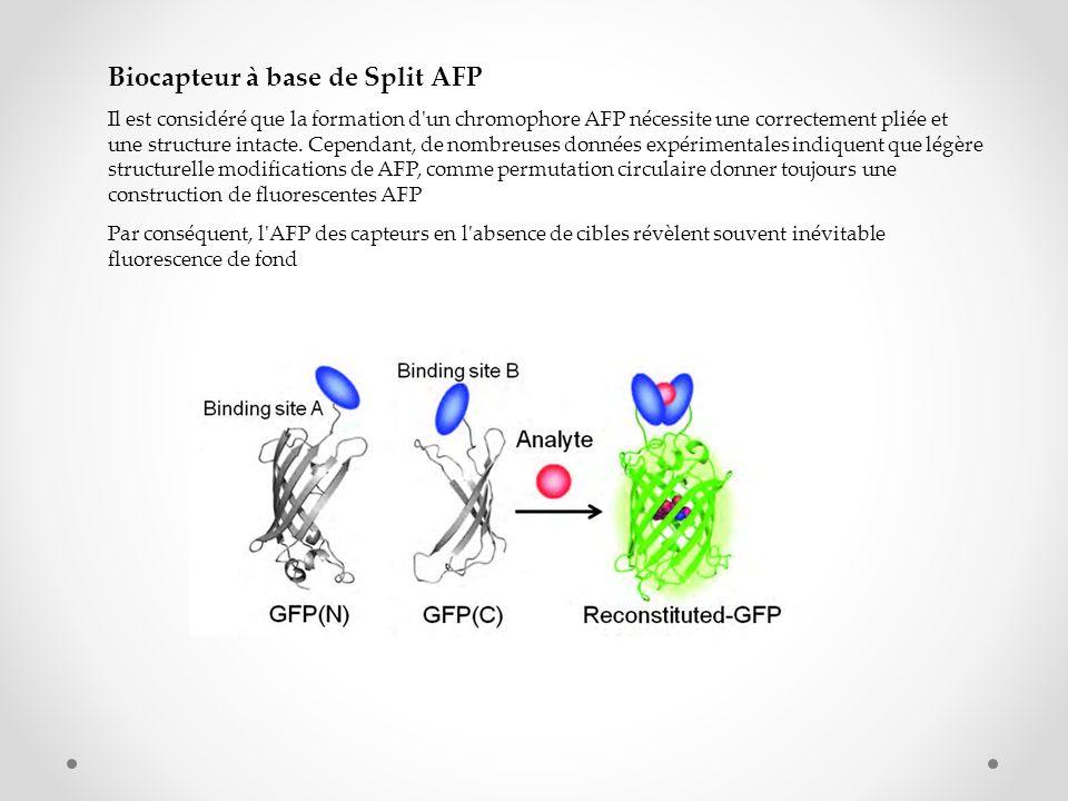 Biocapteur à base de Split AFP Il est considéré que la formation d'un chromophore AFP nécessite une correctement pliée et une structure intacte. Cepen
