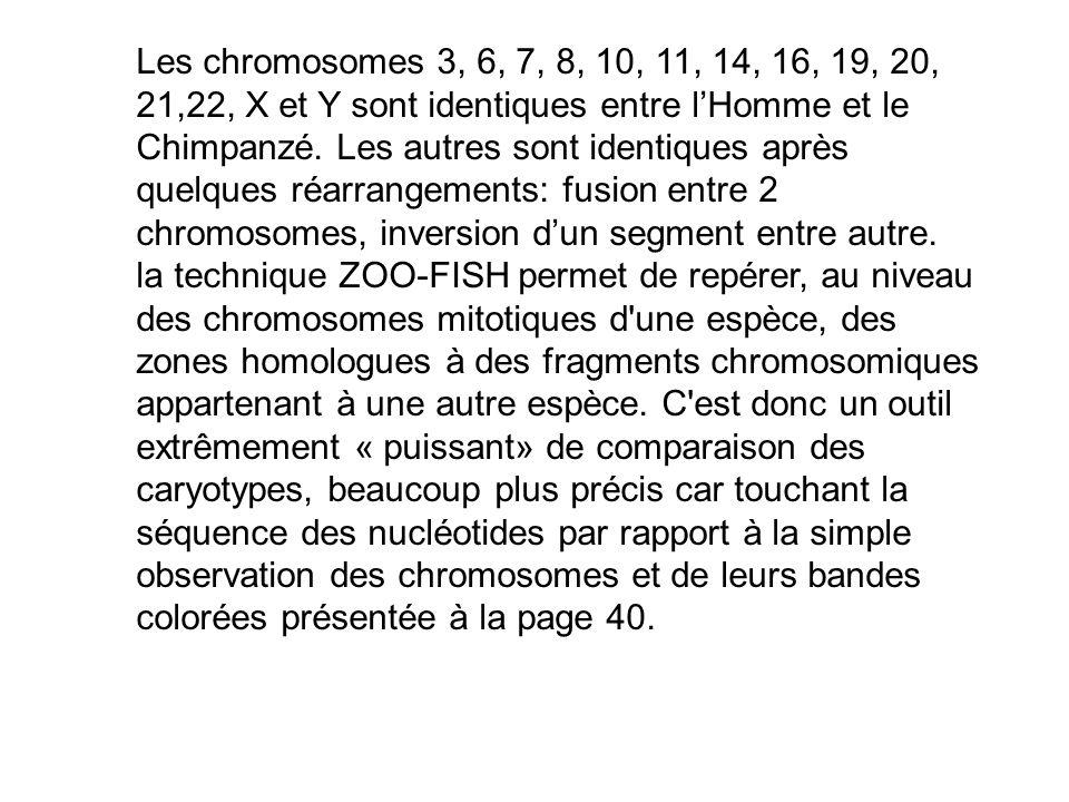 Les chromosomes 3, 6, 7, 8, 10, 11, 14, 16, 19, 20, 21,22, X et Y sont identiques entre lHomme et le Chimpanzé. Les autres sont identiques après quelq