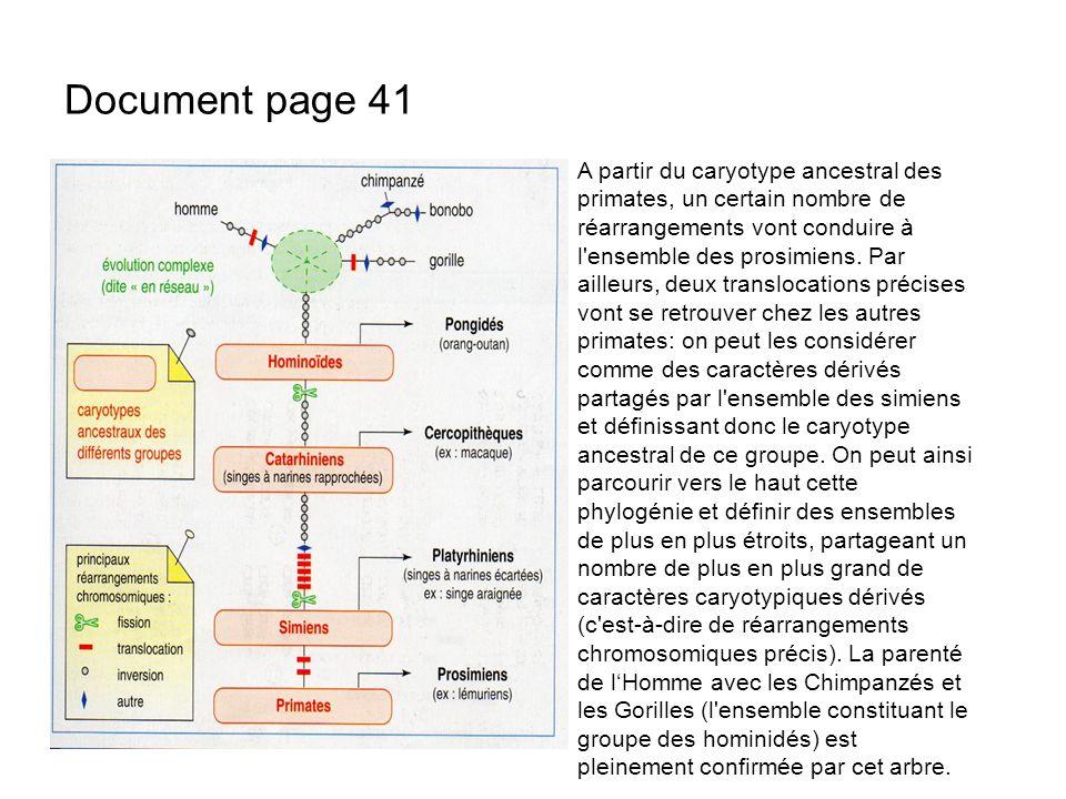 Document page 41 A partir du caryotype ancestral des primates, un certain nombre de réarrangements vont conduire à l'ensemble des prosimiens. Par aill