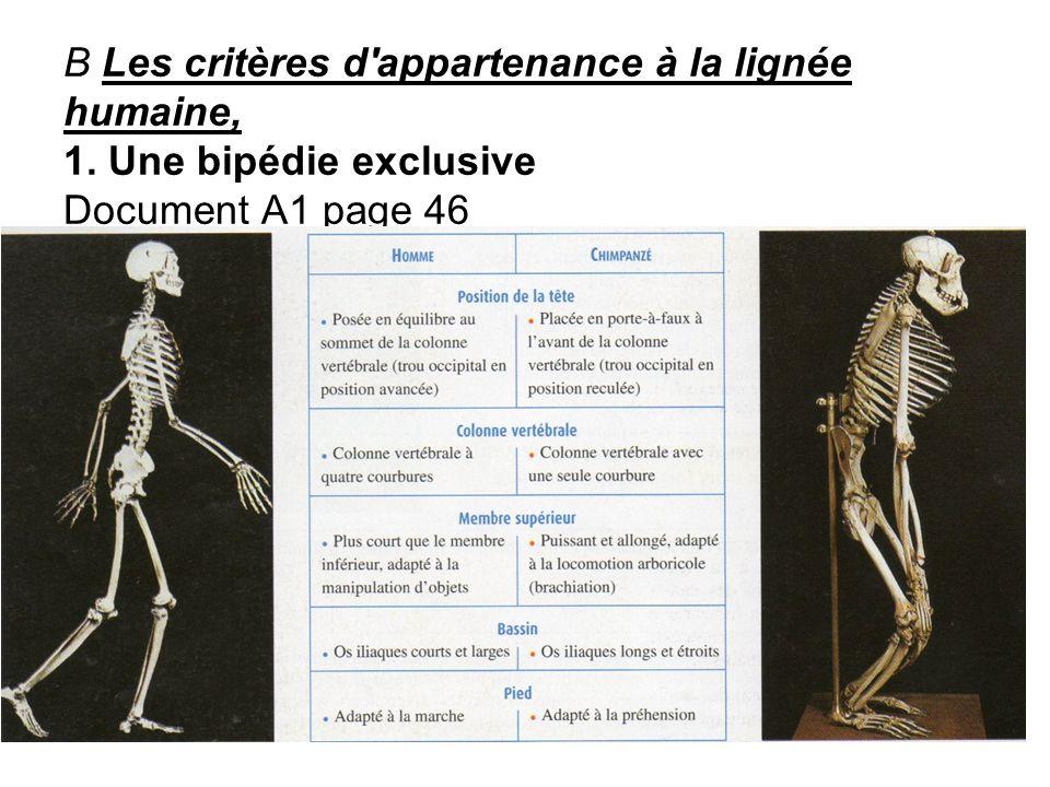 B Les critères d'appartenance à la lignée humaine, 1. Une bipédie exclusive Document A1 page 46