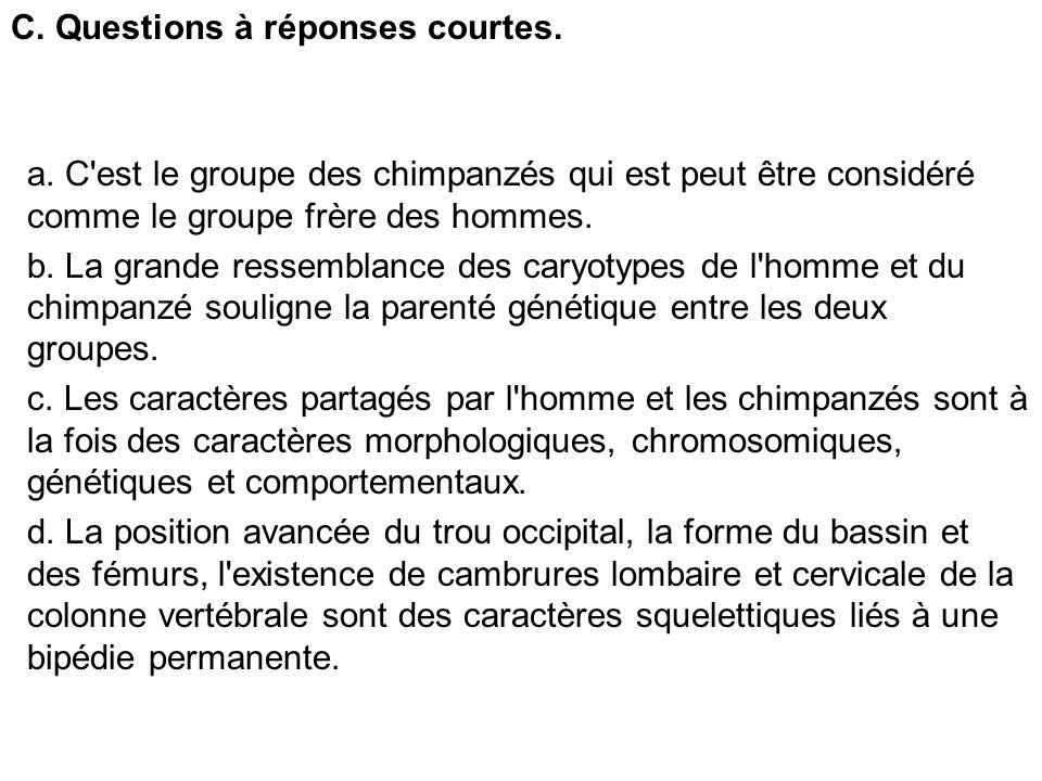 C. Questions à réponses courtes. a. C'est le groupe des chimpanzés qui est peut être considéré comme le groupe frère des hommes. b. La grande ressembl