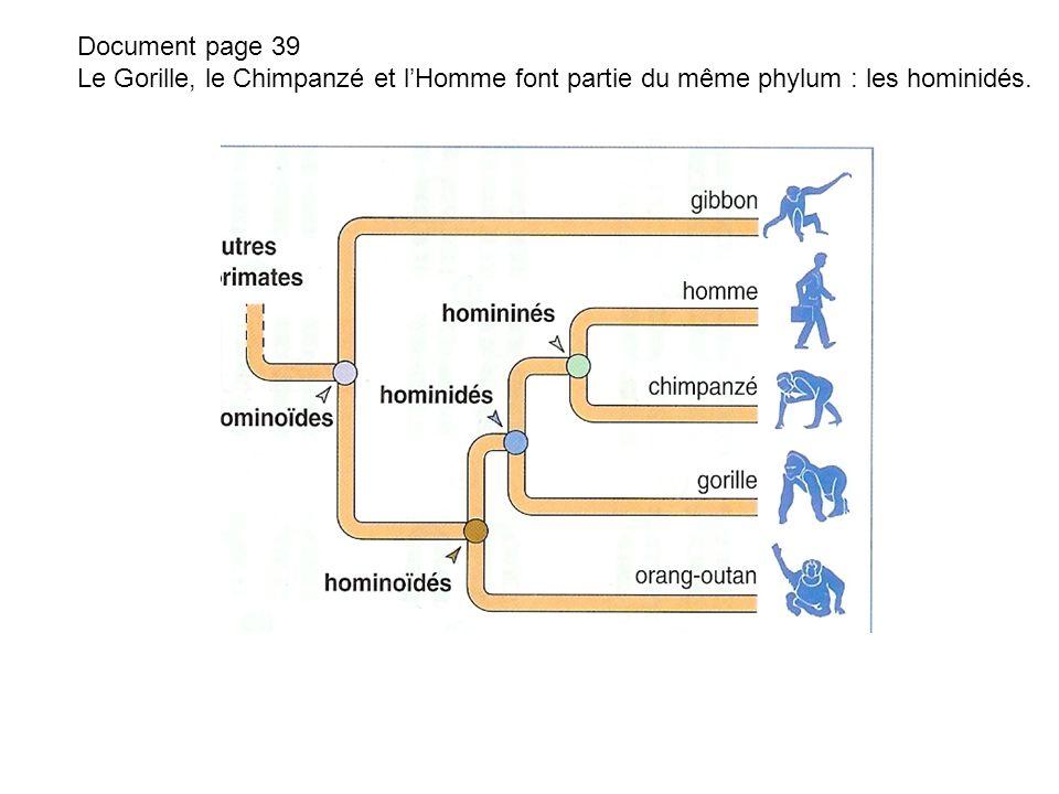 2.A partir de l étude comparée des caryotypes et des chromosomes.