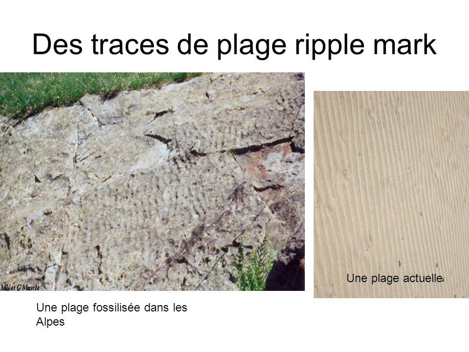 Des traces de plage ripple mark Une plage fossilisée dans les Alpes Une plage actuelle
