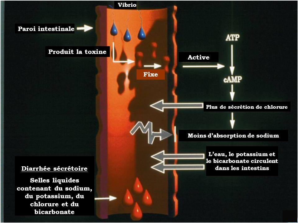 Développement et Opération dun Centre de traitement du Choléra (CTC)