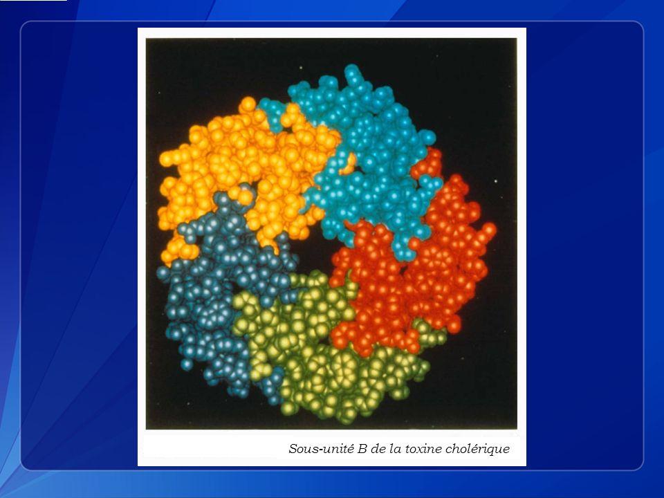 Composition de l électrolyte des selles et des liquides recommandés pour traiter le choléra, en mmol/L NA + K+K+ Cl - Base*Glucose Selles des cholériques13515105450 SRO OMS90208010111 Solution Ringer lactate1304109280 Solution isotonique de chlorure de sodium 1540 00