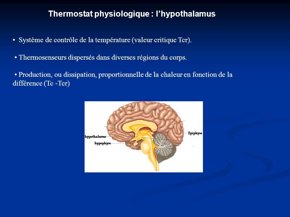 Thermostat physiologique : lhypothalamus Système de contrôle de la température (valeur critique Tcr). Thermosenseurs dispersés dans diverses régions d