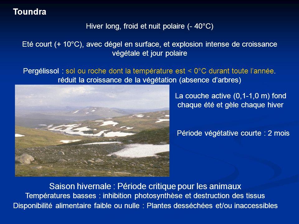 Toundra Hiver long, froid et nuit polaire (- 40°C) Eté court (+ 10°C), avec dégel en surface, et explosion intense de croissance végétale et jour pola