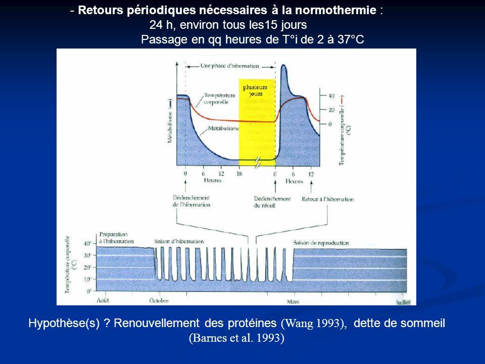 - Retours périodiques nécessaires à la normothermie : 24 h, environ tous les15 jours Passage en qq heures de T°i de 2 à 37°C Hypothèse(s) ? Renouvelle