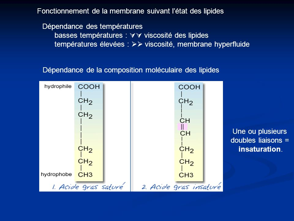 Fonctionnement de la membrane suivant létat des lipides Dépendance des températures basses températures : viscosité des lipides températures élevées : viscosité, membrane hyperfluide Dépendance de la composition moléculaire des lipides Une ou plusieurs doubles liaisons = insaturation.