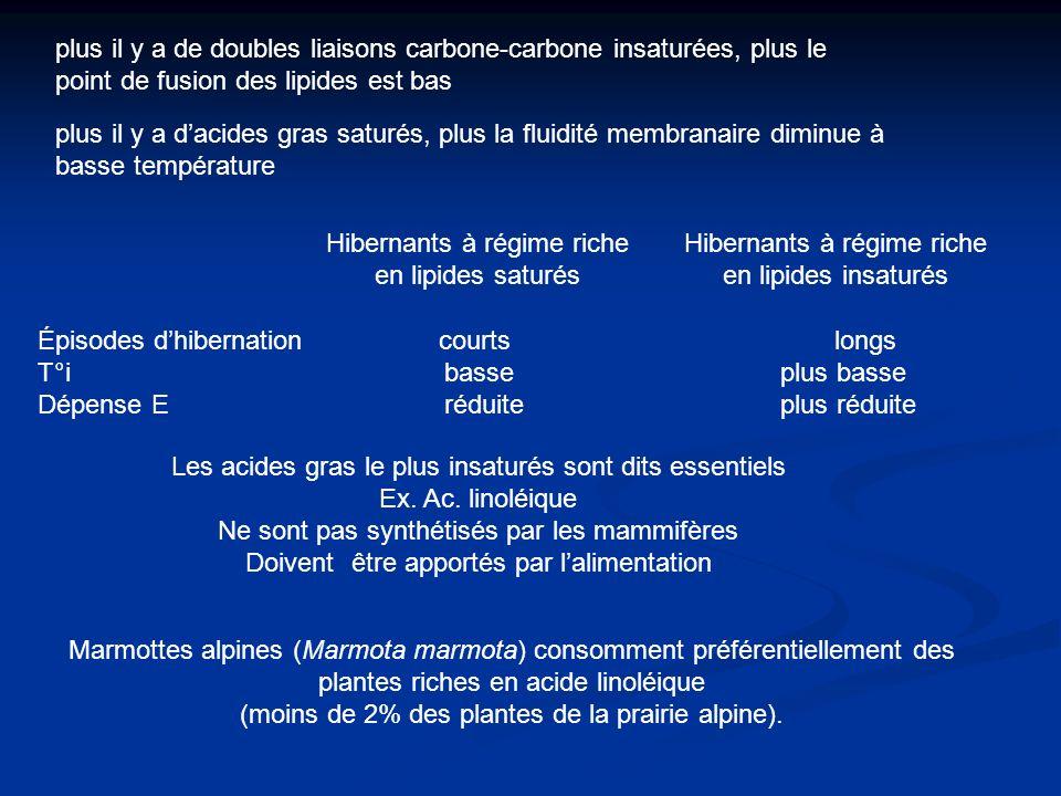 plus il y a de doubles liaisons carbone-carbone insaturées, plus le point de fusion des lipides est bas plus il y a dacides gras saturés, plus la flui