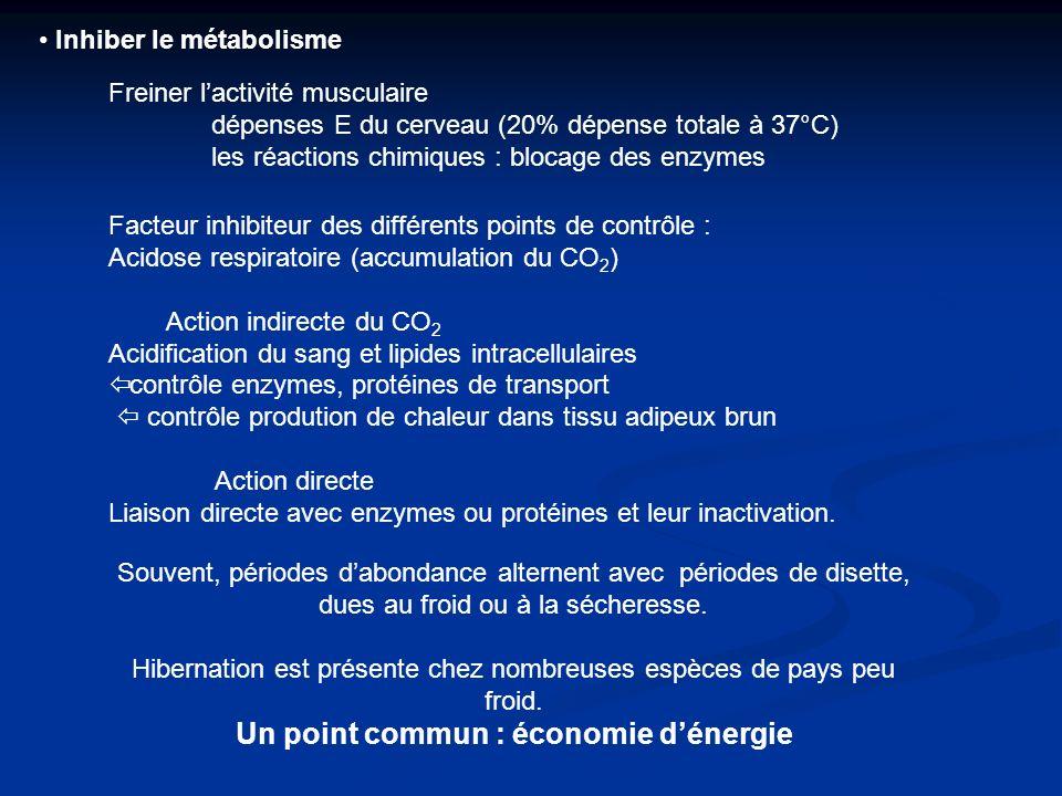 Inhiber le métabolisme Freiner lactivité musculaire dépenses E du cerveau (20% dépense totale à 37°C) les réactions chimiques : blocage des enzymes Fa