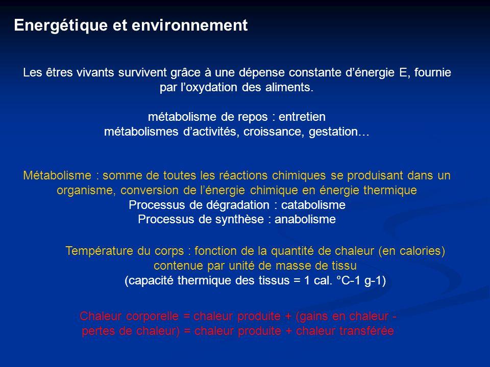 Les êtres vivants survivent grâce à une dépense constante dénergie E, fournie par loxydation des aliments. métabolisme de repos : entretien métabolism