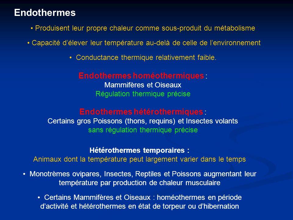 Produisent leur propre chaleur comme sous-produit du métabolisme Capacité délever leur température au-delà de celle de lenvironnement Conductance thermique relativement faible.