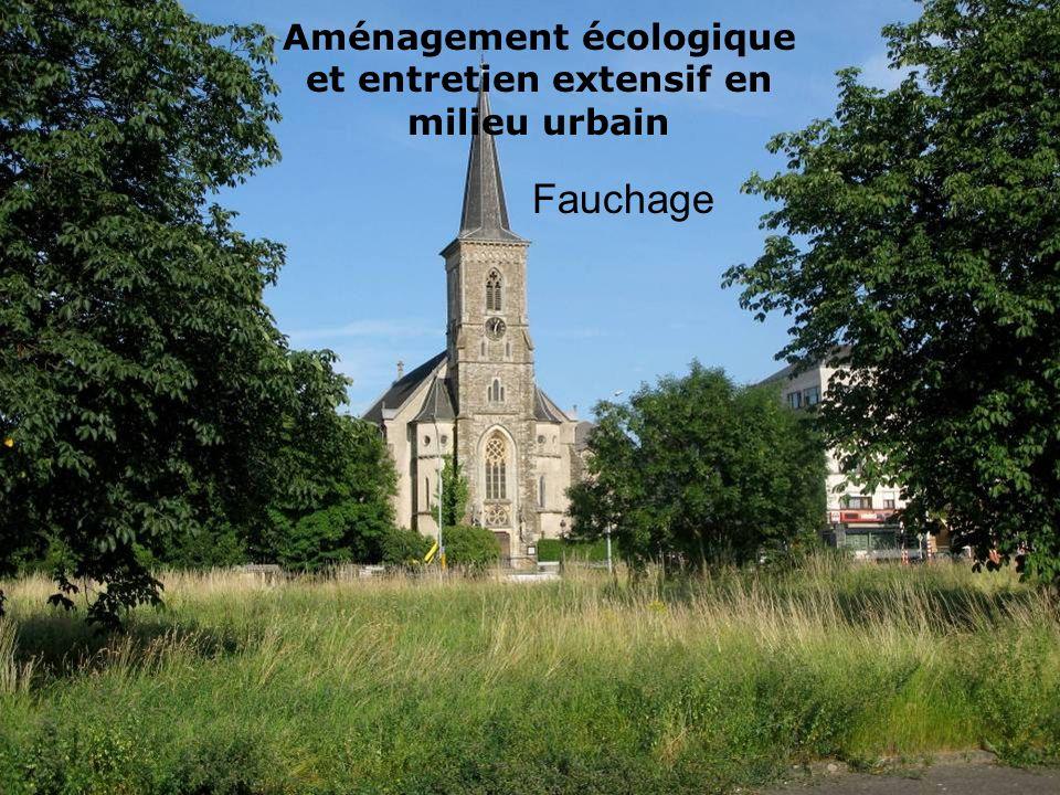 Aménagement écologique et entretien extensif en milieu urbain Fauchage