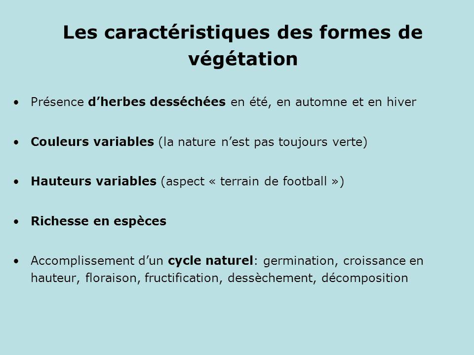 Les caractéristiques des formes de végétation Présence dherbes desséchées en été, en automne et en hiver Couleurs variables (la nature nest pas toujou